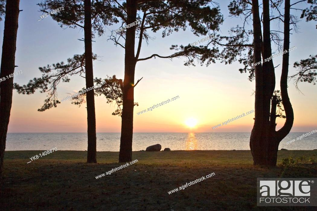 Stock Photo: Trees Silhouettes Against Sun by Sea.