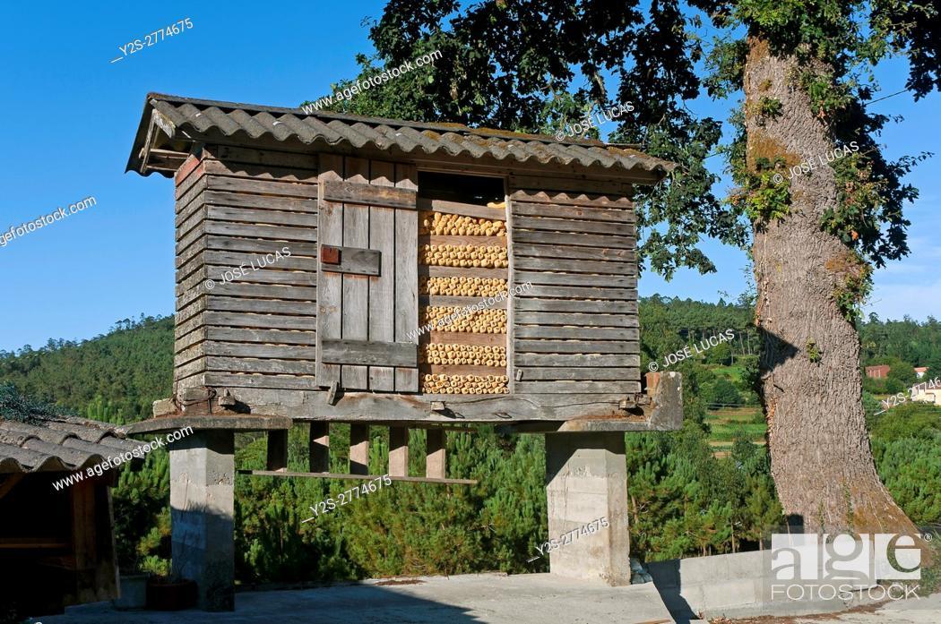 Stock Photo: Typical galician granary (Horreo), Cabana de Bergantiños, La Coruña province, Region of Galicia, Spain, Europe.