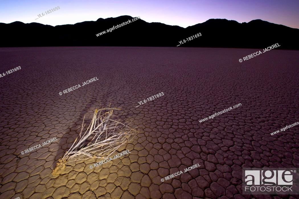 Stock Photo: A single branch resting on the Racetrack Playa in Death Valley National Park.