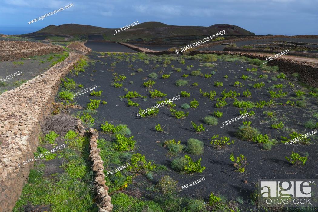 Stock Photo: Rural landscape, Tinajo, Lanzarote Island, Canary Islands, Spain, Europe.