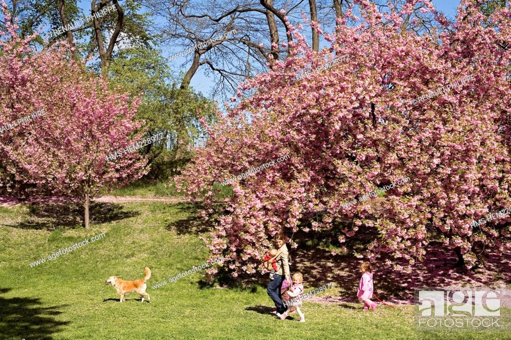 Stock Photo: United States, New York, Brooklyn, Botanical Garden in Spring, Blossoming Trees.