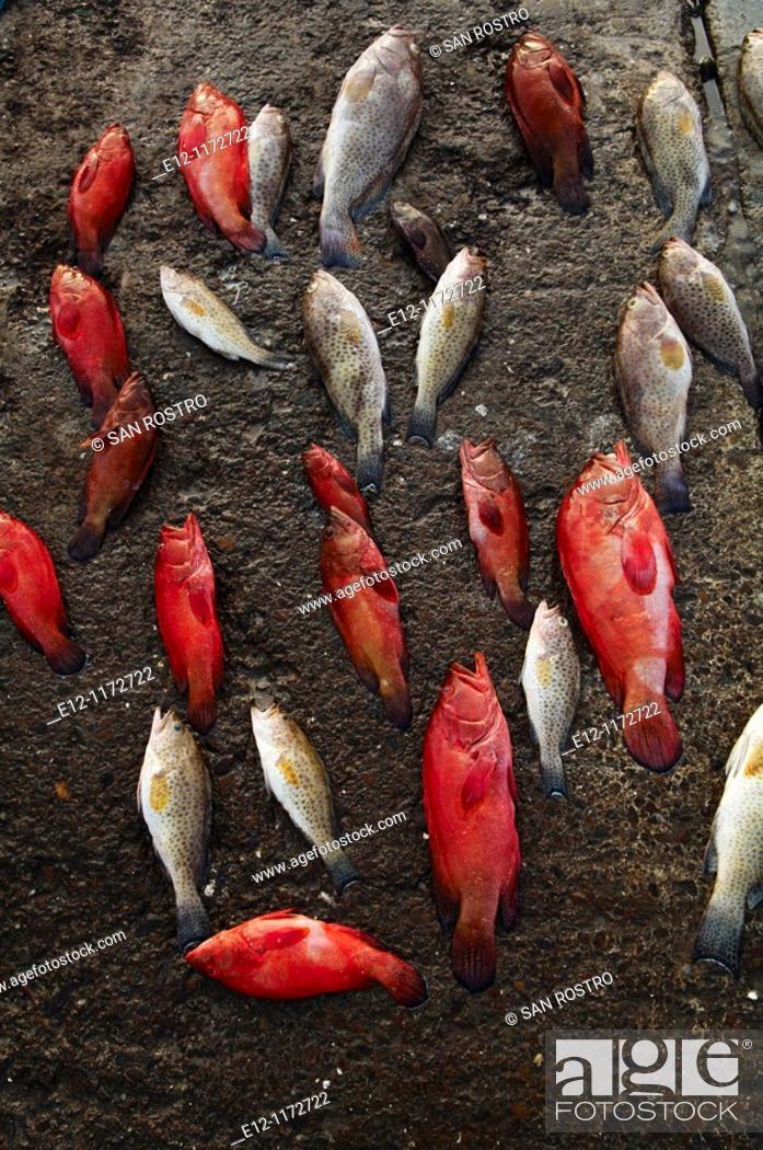 Stock Photo: Middle East, Oman, Mussandam area, fish market od Dibba.