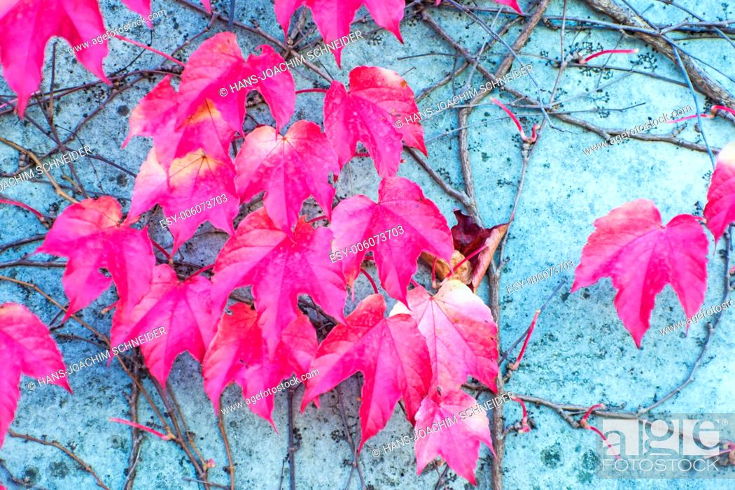 Imagen: autumnal painted leaves.