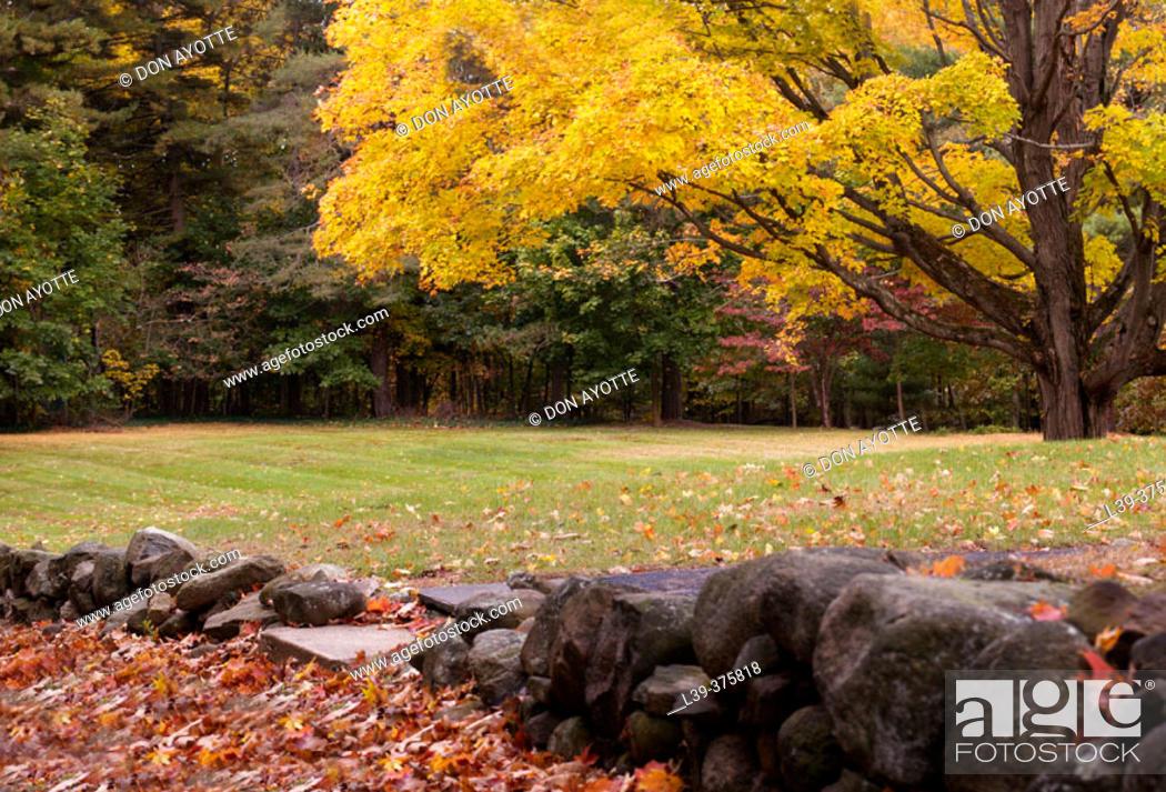 Stock Photo: Fall in Hamden. USA.