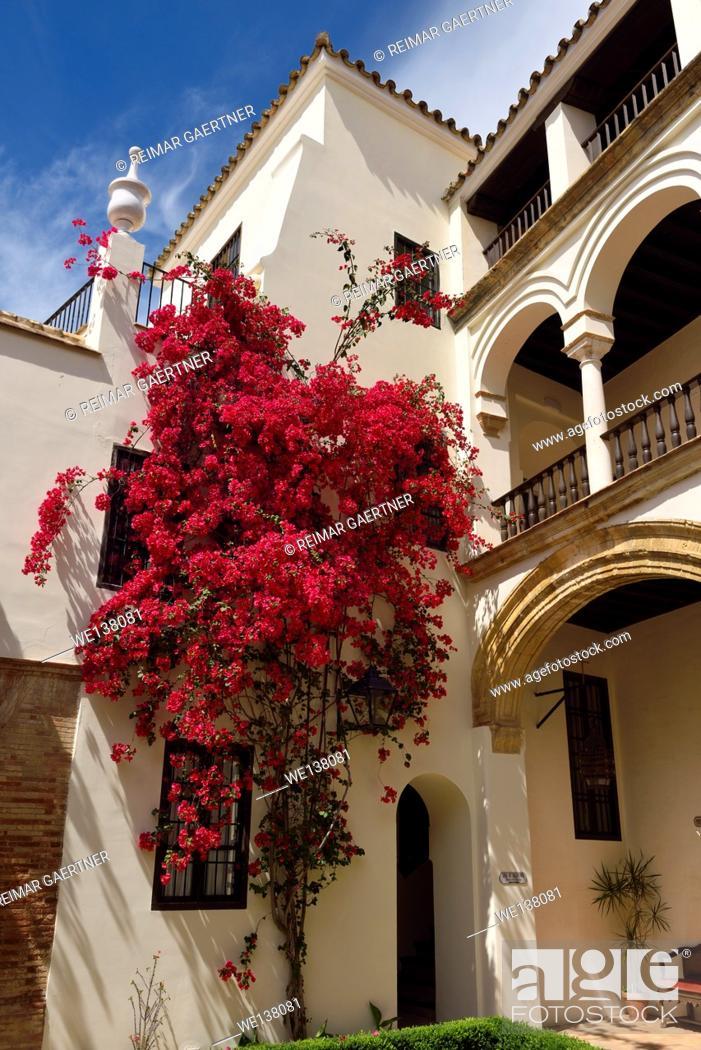 Stock Photo: Interior courtyard with bougainvillea of las casas de la juderia hotel in Cordoba Spain.