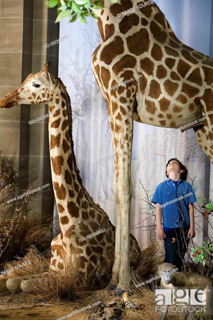 Stock Photo: Boy standing beneath a giraffe.