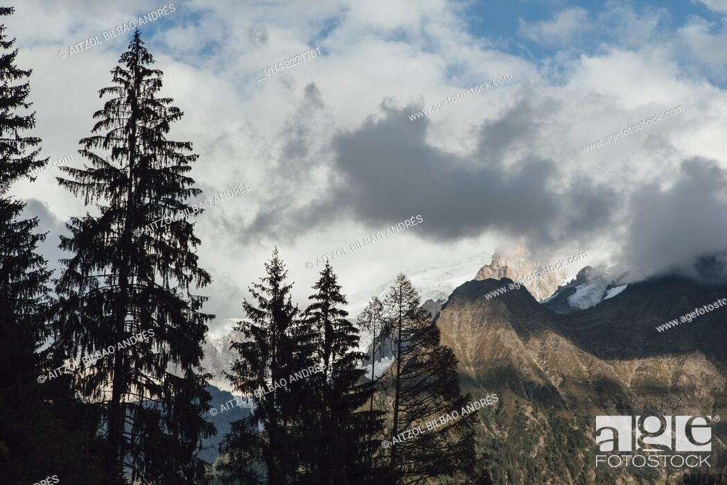 Imagen: Trees around Chamonix Mont Blanc, French Alps. The glacier goes down from the mountain down to the valley.