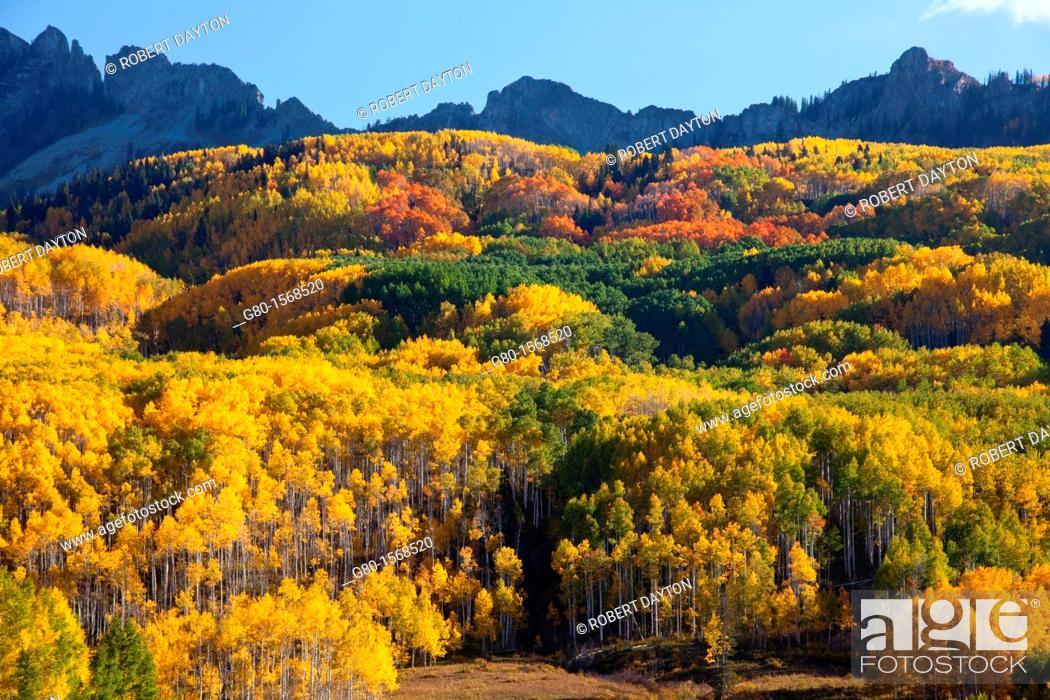 Stock Photo: Fall, Kebler Pass, Colorado.