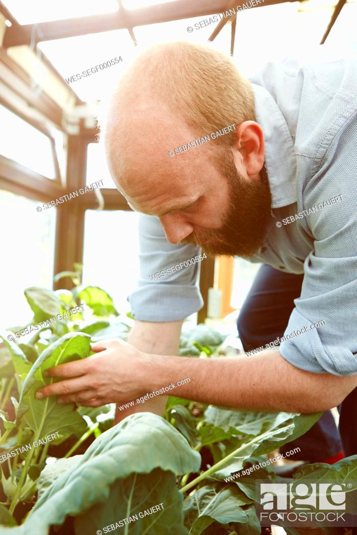 Stock Photo: Young man working in green house.