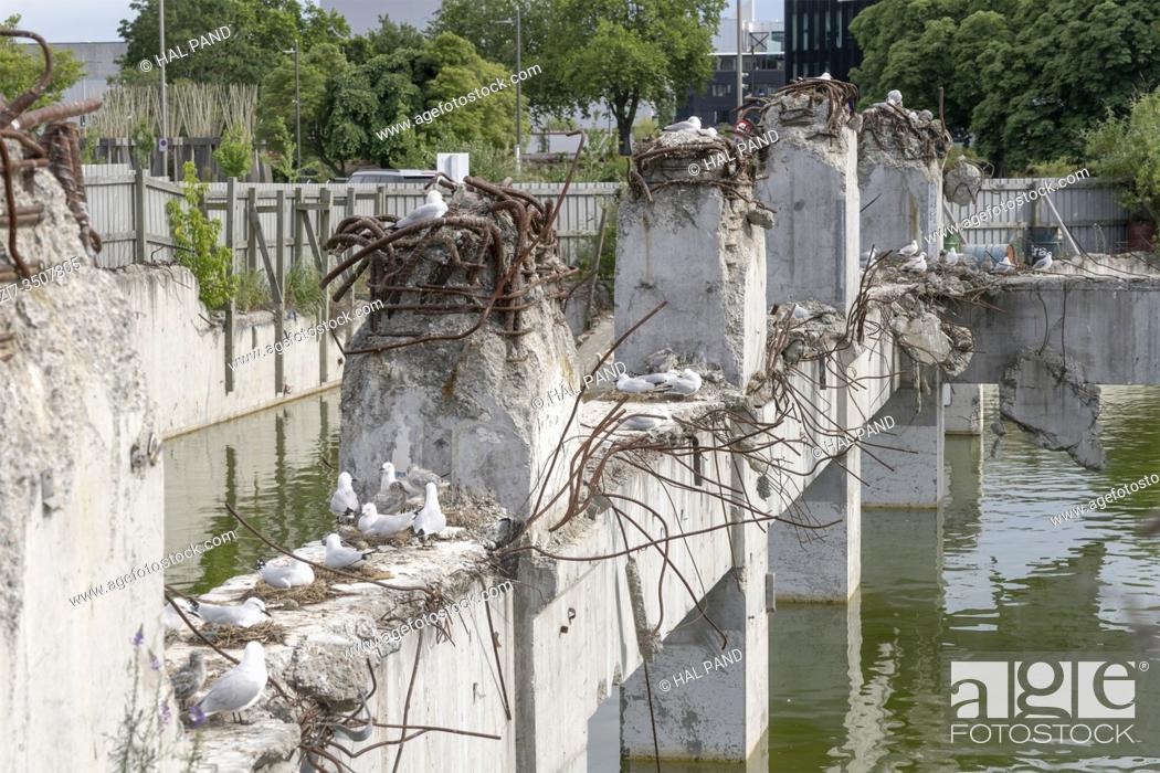 Stock Photo: cityscape with Black-billed gulls at flooded ruins of collapsed concrete building, shot in bright spring light at Christchurch, South Island, New Zealand.