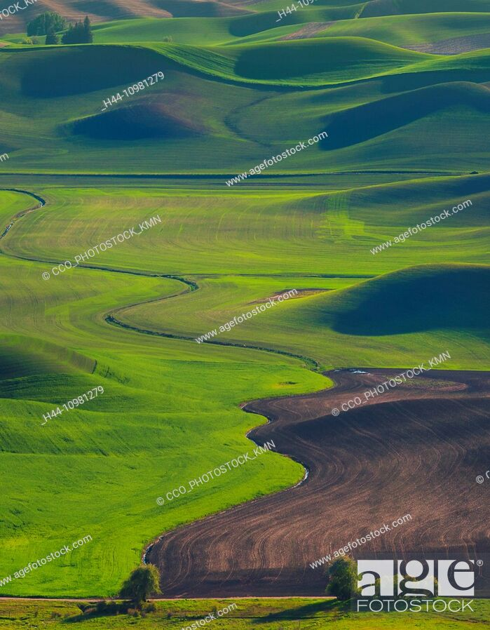 Stock Photo: rolling hills in Palouse.
