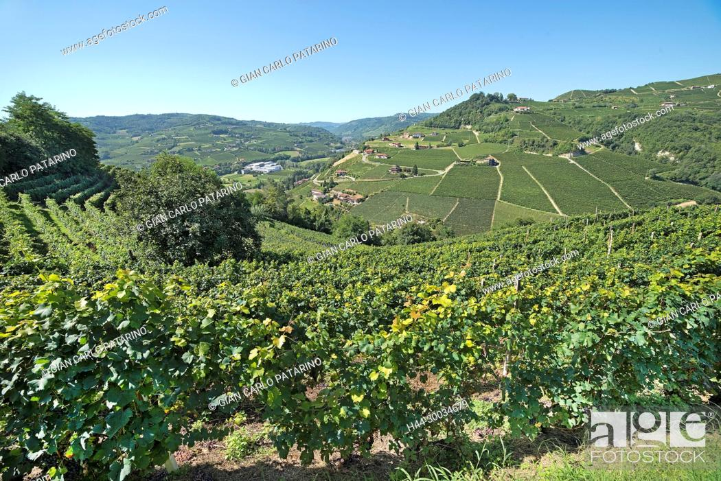 Stock Photo: Italy, panorama of vineyards of Piedmont Langhe-Roero and Monferrato on the World Heritage List UNESCO Italy, Piedmont, Vineyards.