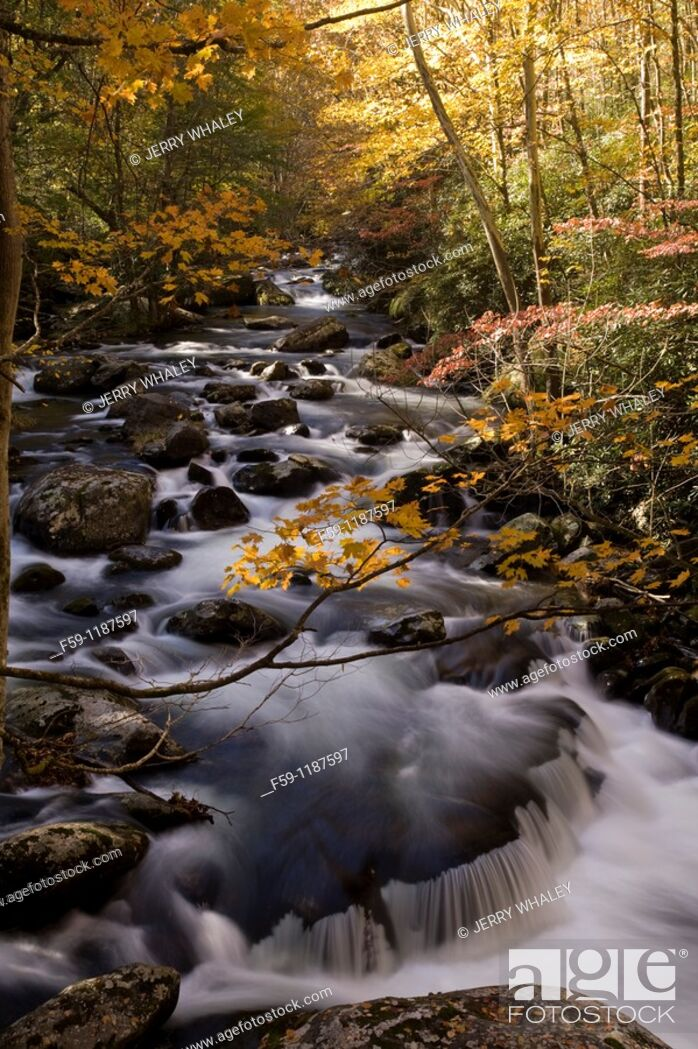 Stock Photo: Autumn, Tremont, Great Smoky Mountains National Park, TN.