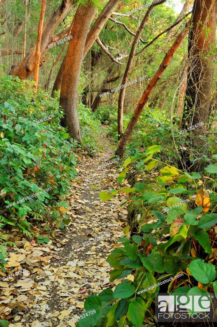 Stock Photo: hiking trail, Tent Island, Gulf Islands, British Columbia, Canada.