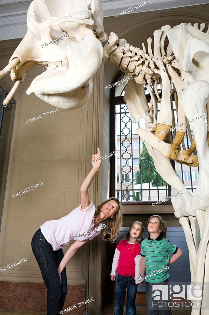 Stock Photo: Mother and children looking at an elephant skeleton.