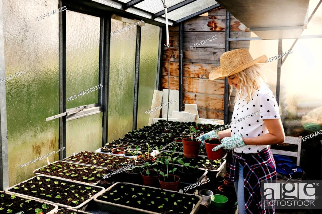 Stock Photo: Young woman gardening in a greenhouse.