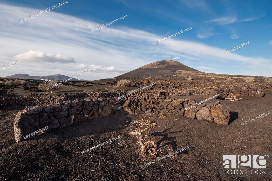 Stock Photo: Volcanic vineyard in La Geria, Lanzarote , Canary islands, Spain.