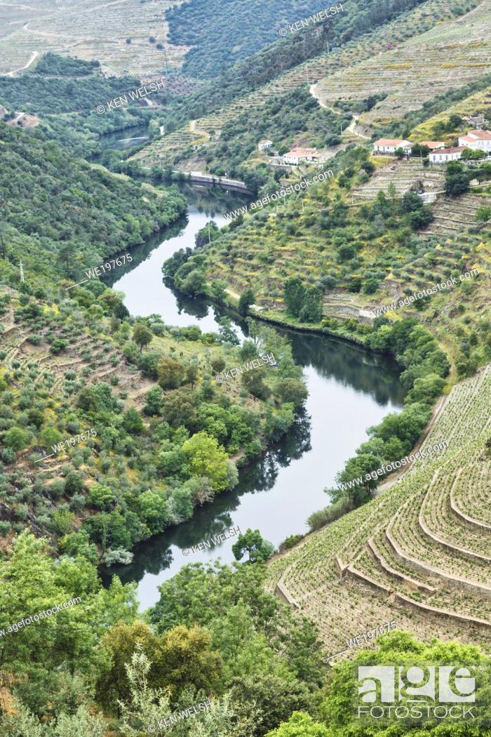 Stock Photo: Portugal. Vineyards along the Tavora river, a tributary of the Douro river between Paso da Regua and Pinhao on the Viseu District or southern bank of the river.