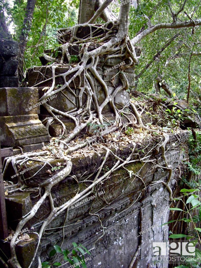 Stock Photo: Rootsystem creeping on stone wall at Beng Mealea, Cambodia.