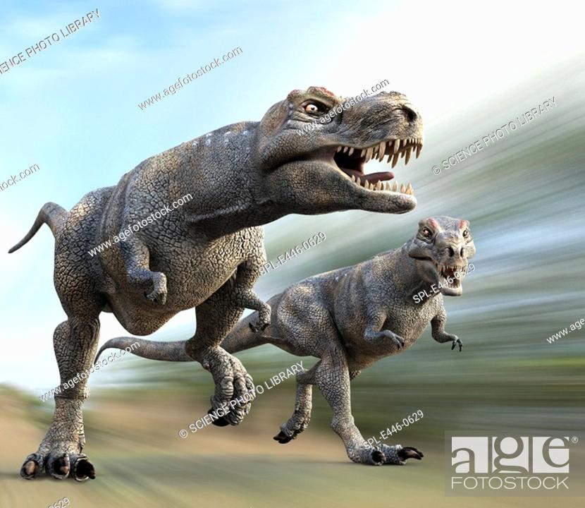 Stock Photo: Tyrannosaurus rex dinosaurs running, artwork  T  rex was a carnivorous theropod dinosaur that existed in the Upper Mastrichtian stage of the Cretaceous Period.