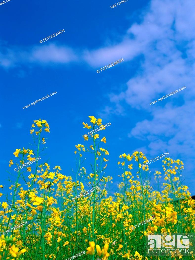 Stock Photo: scenery, plant, cloud, sky, film.