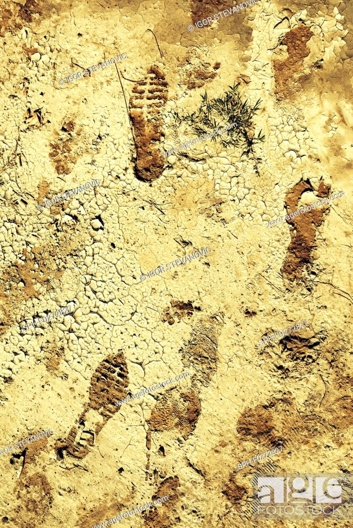 Stock Photo: Shoe and foot prints in mud.