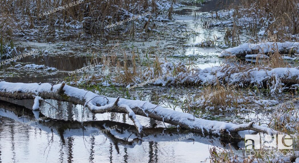 Stock Photo: Broken birch tree trunk snow wrapped lying over water of Lesna River in winter, Bialowieza Forest, Poland, Europe.