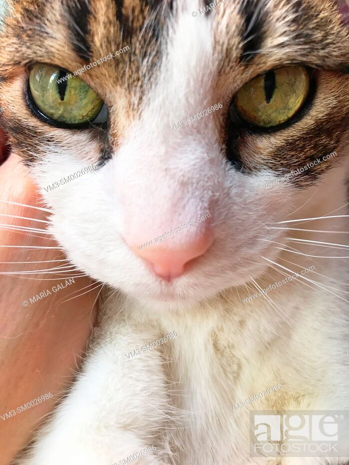 Stock Photo: Tabby and white cat' s face. Close view.