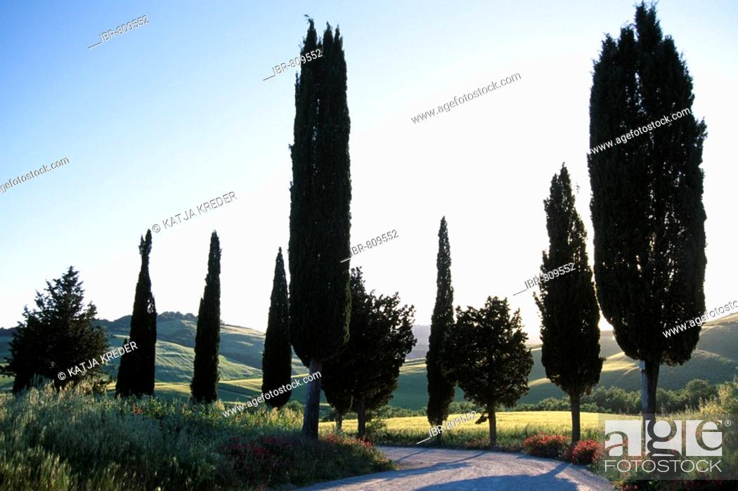 Stock Photo: Cypress lined road, Quirico d'Orcia, Tuscany, Italy.