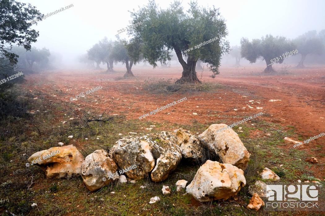 Stock Photo: Fog in the olive grove  Carabaña  Madrid Spain.