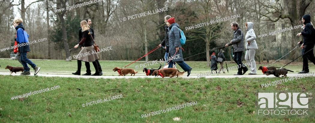 Stock Photo: 16 February 2020, Berlin: Dachshund owners walk together during the big dachshund weekend through the Berlin district of Neukölln.