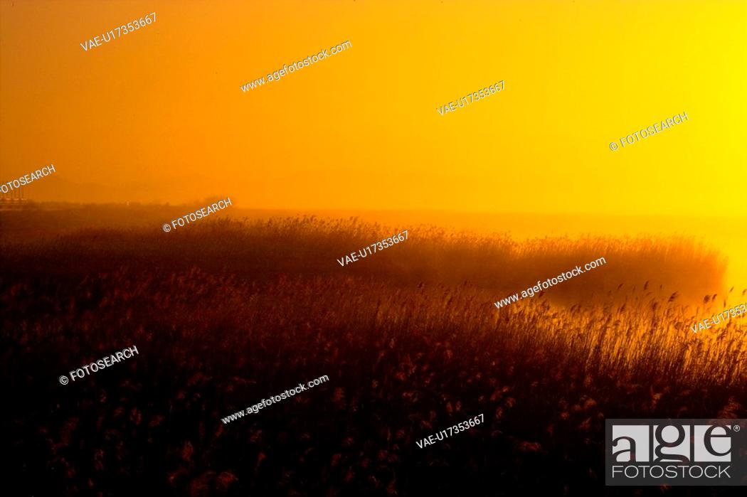 Stock Photo: eulalia, sunset, plant, scenery, nature, plants, river.