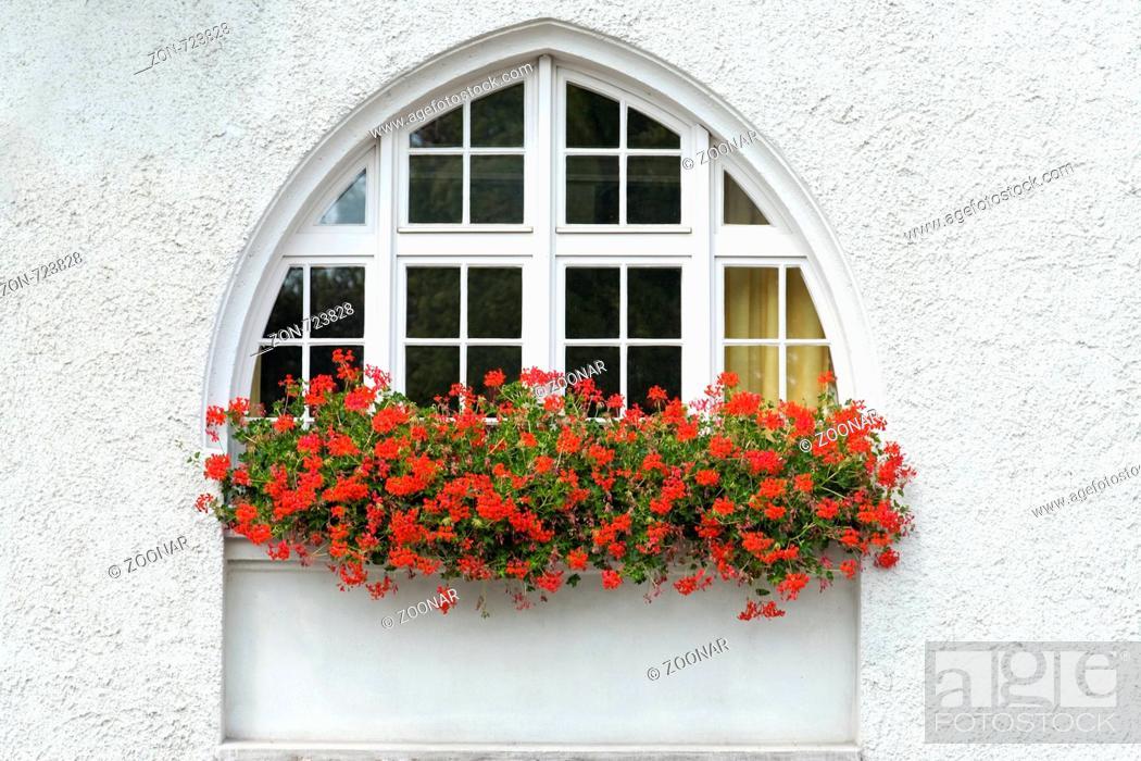 Fenster mit Geranien in Bergisch-Gladbach, Stock Photo, Picture And ...