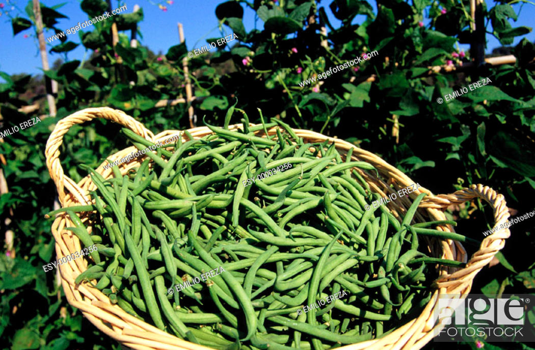 Stock Photo: Green beans.
