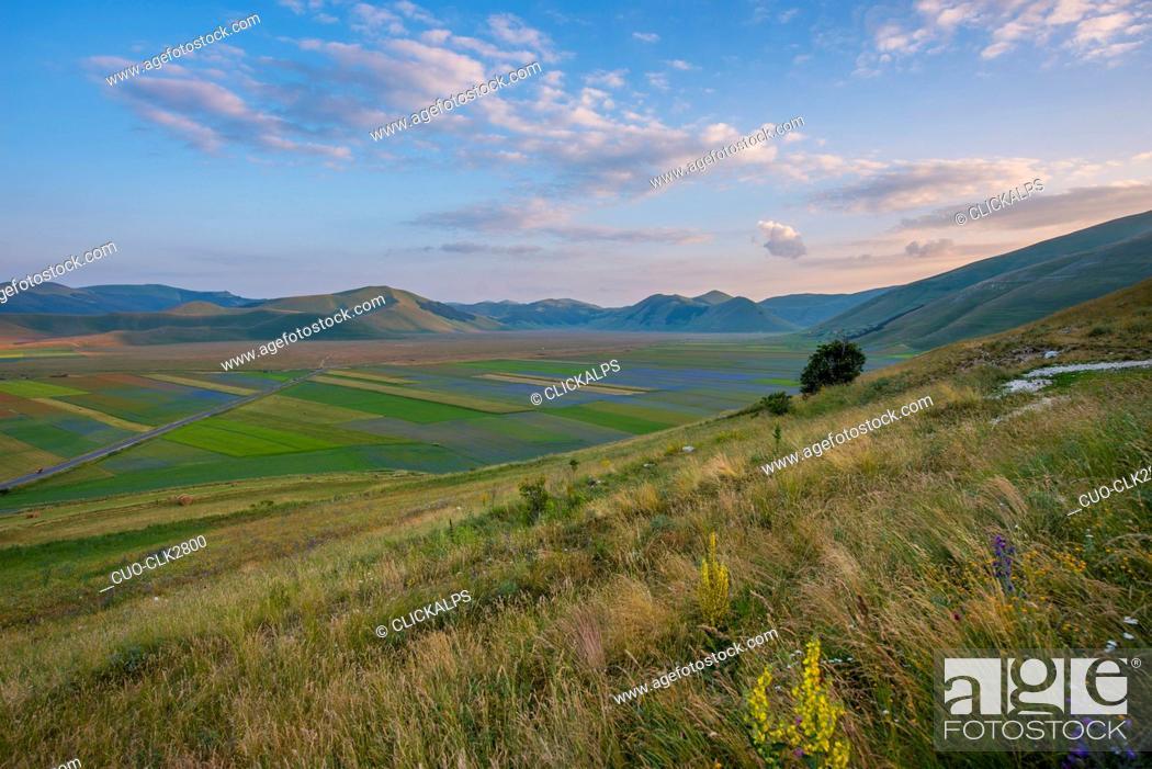Imagen: Blooming in Piano Grande of Castelluccio di Norcia, Monti Sibillini National Park, Umbria, Italy.