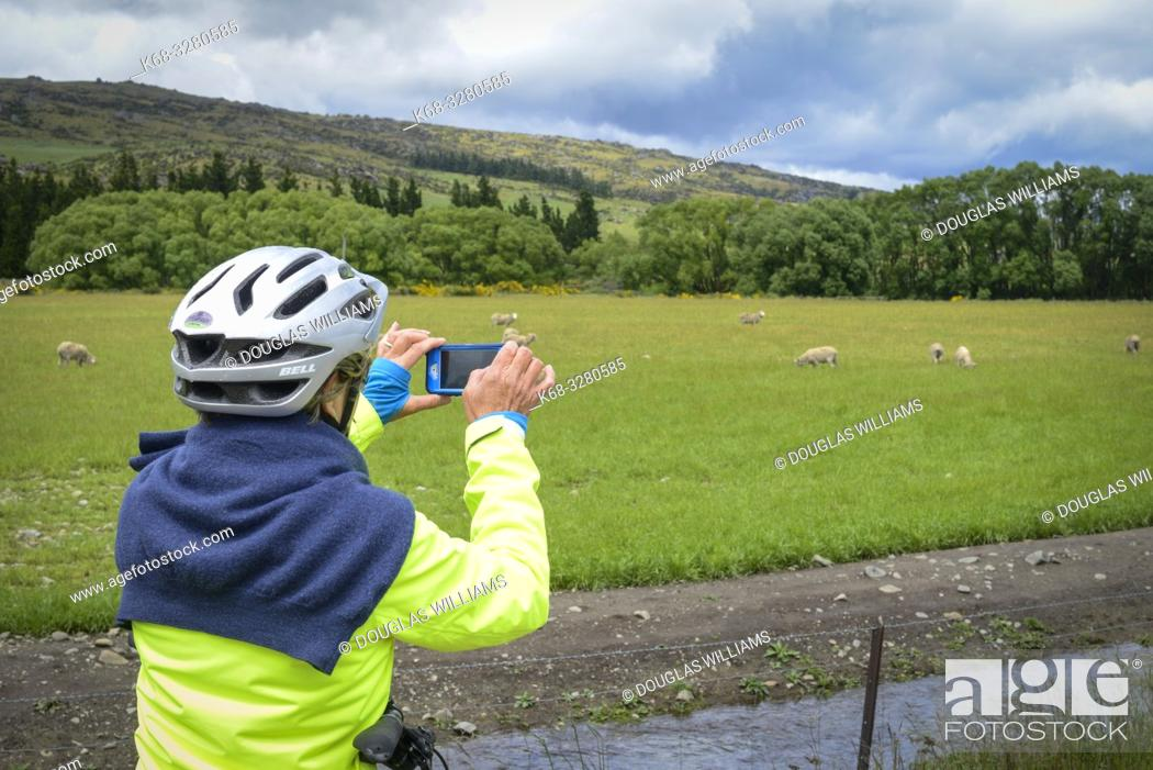 Stock Photo: A woman takes a photo on the Central Otago Rail Trail, South Island, New Zealand.