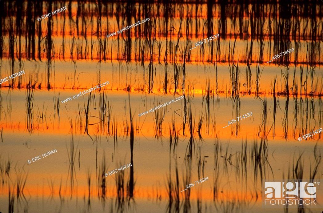 Stock Photo: Boatwake at dusk in the spatina grass.