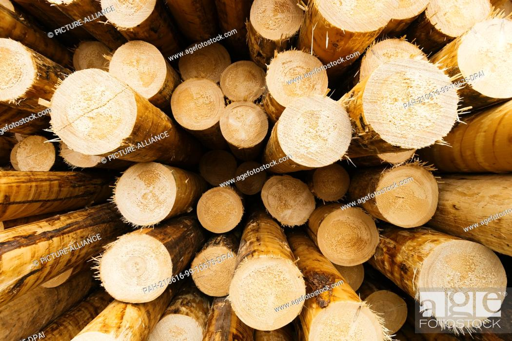 Stock Photo: PRODUCTION - 07 June 2021, Baden-Wuerttemberg, Hausach: Debarked tree trunks lie in the log yard on the premises of a sawmill.