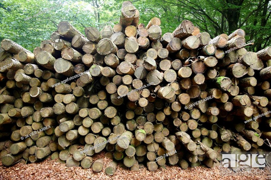 Stock Photo: Logs, Belate, Baztan Valley, Navarra, Spain.
