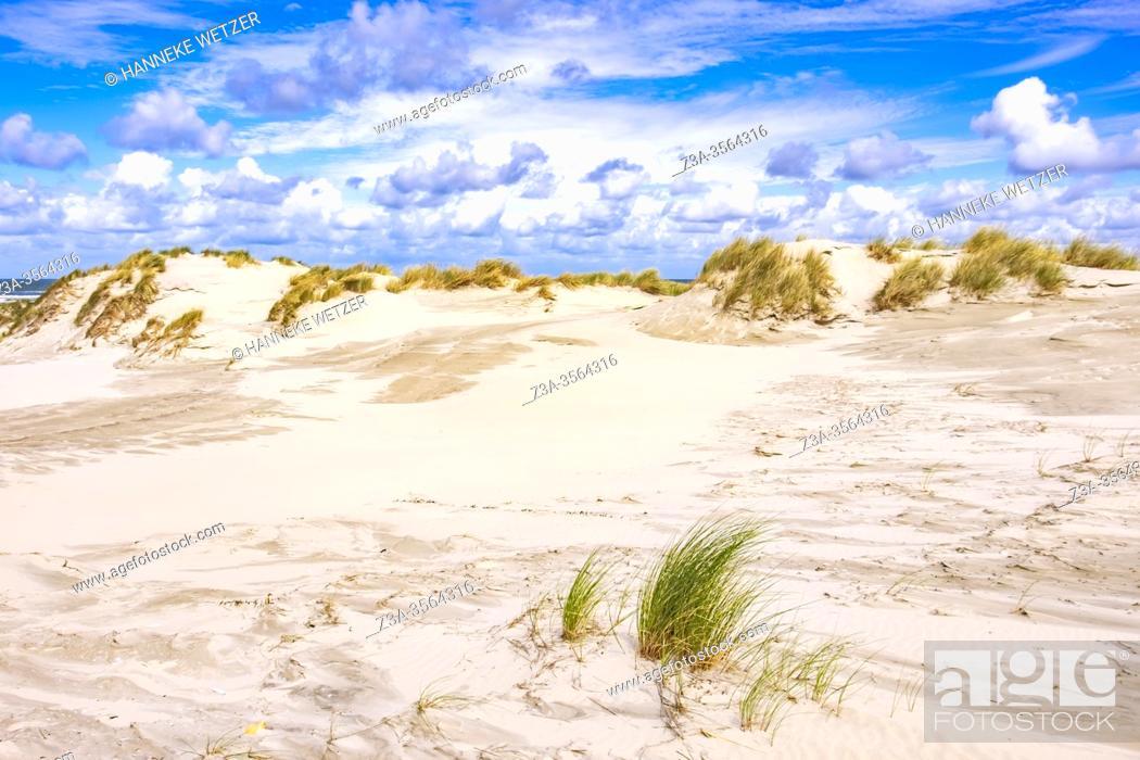 Photo de stock: Sand dunes on Frisian Island Terschelling, The Netherlands, Europe.