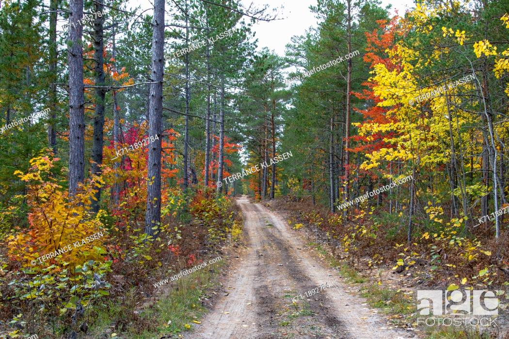 Stock Photo: A road with fall foliage color through the deciduous forest of the Uppper Penninsula of Michigan, USA.