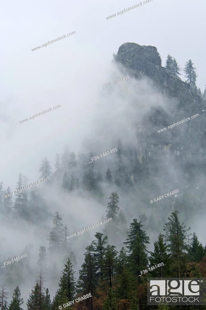 Stock Photo: Trees in clouds, Yosemite National Park, California.