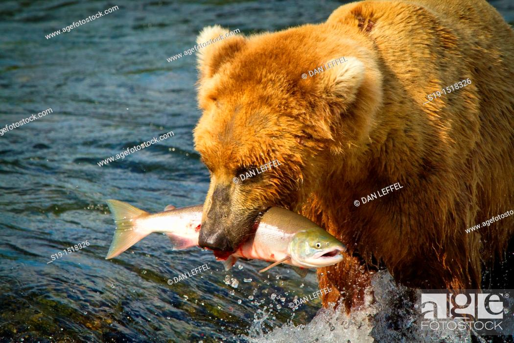 Stock Photo: Unlucky Salmon.