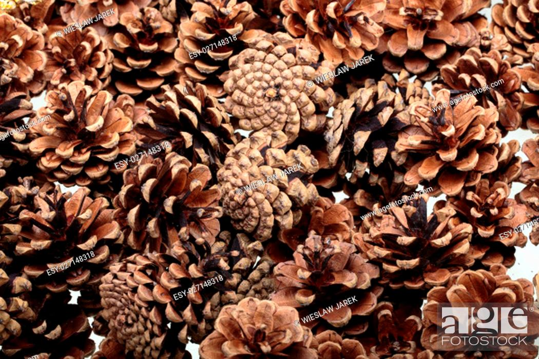 Stock Photo: Background of dried natural pine cones. Conceptual of the Christmas season.