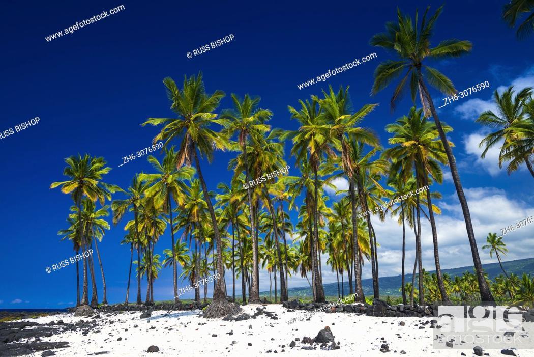 Imagen: Coconut palms at Pu'uhonua O Honaunau National Historic Park (City of Refuge), Kona Coast, Hawaii USA.