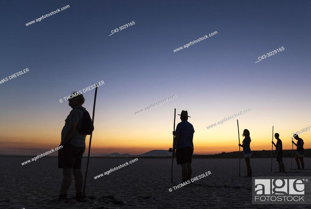 Stock Photo: Volunteers at dawn at the Laguna de Fuente de Piedra near the town of Antequera. Waiting for the start of the immature Greater Flamingos (Phoenicopterus roseus).