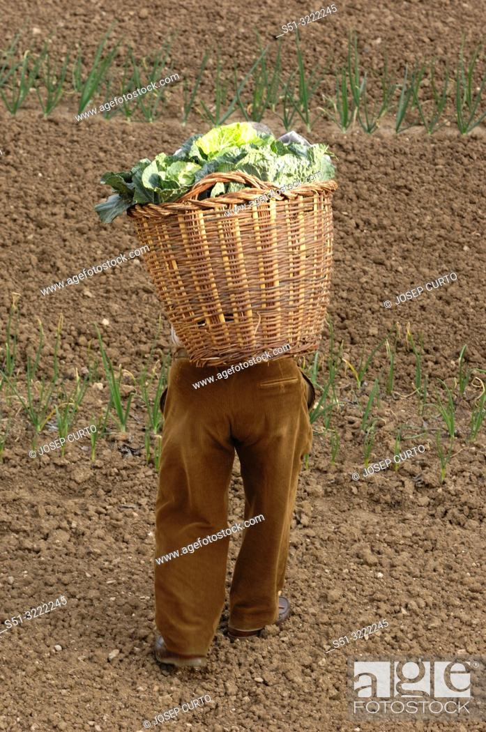 Photo de stock: farmer loaded with a basket of vegetables.