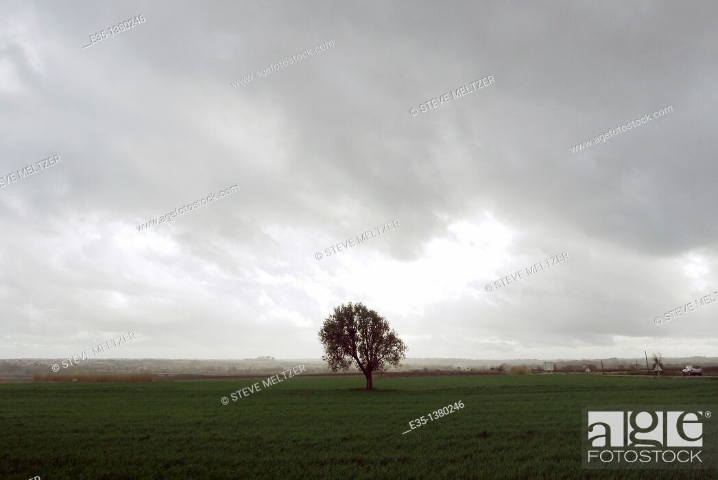 Stock Photo: A lone tree on a grassy field as a storm approacehs.