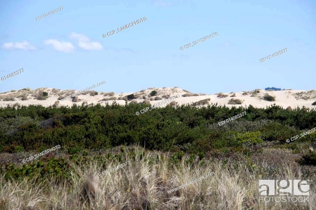 Stock Photo: Sand Dunes. Photo taken at Oregon Dunes National Recreation Area on Highway 101.