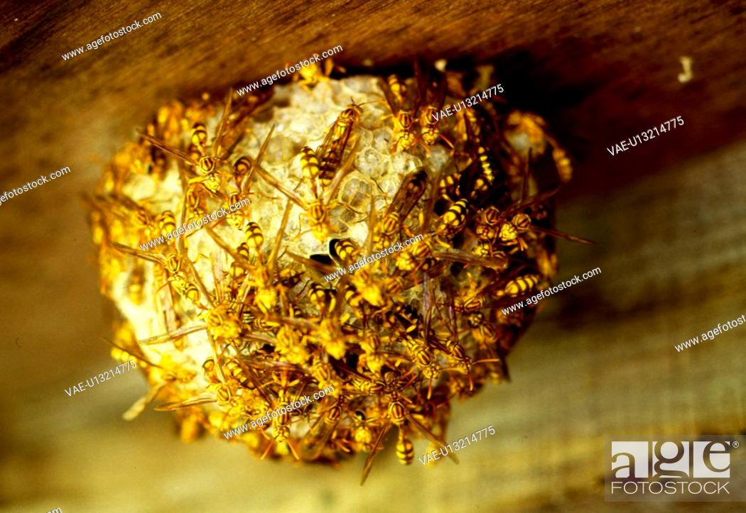 Stock Photo: animal, nature, wasp, beehive, scene, arthropod, landscape.